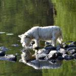Tänään vietetään valtakunnallista koiranpäivää – nyt teemana on koiran luonne ja käyttäytyminen