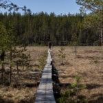 Kysely paljasti koronakevään vaikutuksen suomalaisten luontosuhteeseen – suurin osa vastaajista on lisännyt luonnossa liikkumista