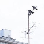 Ylen HD-lähetykset siirtyivät Digitan antenniverkkoon – kanavien uudelleen virittäminen voi olla tarpeen