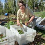 Toimelias amerikkalainen on työntänyt kätensä syvälle Leväslahden multaan – pienviljelijäyhdistys on sanana vaikea, mutta yhteisönä siihen on ollut helppo solahtaa