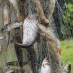 Längelmäveden kalatalousalue rakentaa verkkosivut ely-keskuksen avustussummalla