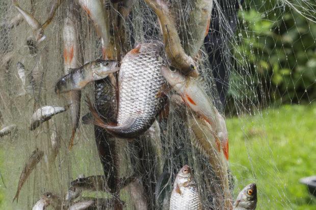 Kalat verkossa