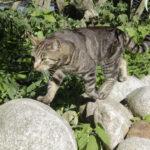Kissojen heitteillejättö on väärin