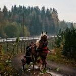 Uusioparin hevoset varsovat – kahden kovan juoksijan jälkeläisille odotetaan menestystä