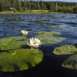 Orivedenkin seudun pintavesien tila on kemiallisesti huono, mutta tiukan rajan ylittyminen ei kerro koko totuutta