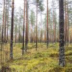 """""""Monet ovat pelästyneet"""" – EU:n kunnianhimoinen metsästrategia puhuttaa Oriveden alueen metsänomistajia"""