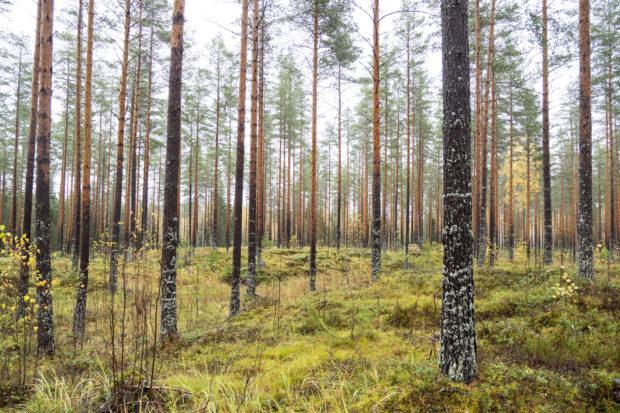 metsätilan sukupolvenvaihdos Orivesi