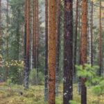 Metsänhoitoyhdistys Pohjois-Pirkalle valittiin uusi valtuusto – Orivedeltä ja Juupajoelta pääsi läpi yhteensä kahdeksan henkilöä