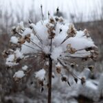 Vastaa kyselyyn: Lumi tuli, lumi suli – mikä on sinun suhteesi lumeen?