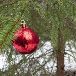 Luonnonkuusi on monelle se ainoa oikea joulukuusi – kissaperheessä ei kuusta kuitenkaan enää katsella