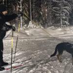 Oriveden hiihtoladut ovat myös koirahiihtäjien mieleen – lennokkaasta menosta nauttivat niin koirat kuin niiden omistajat