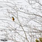 Anna linnuille ruokailu- ja leporauha ja havainnoi huomaavaisesti – erityisen tärkeää tämä on pakkaspäivinä