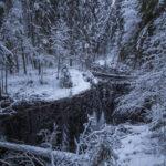 Orivedelle perustettiin viime vuonna kuusi uutta suojelualuetta Metso-rahoituksella