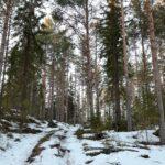 Hirvieläintavoitteet asetettu Pohjois-Hämeeseen – kauriskolarit yleistyneet Oriveden keskustan lähellä