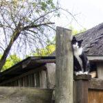 Kun kissa parkkeeraa puuhun, palokunta tulee paikalle vain tosi hädässä