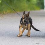 Onninpolun tienoo, Kampus ja Lehtimäen puistoalue nousivat kärkeen koirapuistokyselyssä