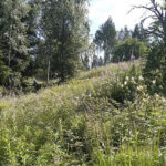 Helmi-ohjelma etsii perinnemaisemien kunnostajia – Oriveden seudulta saatiin mukaan viime vuonna yksi kohde