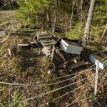 Karhut kävivät mylläämässä hakekasassa ja hajottivat mehiläispesiä Hirvijärvellä