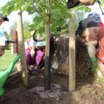 Kädet multaan, läträämään ja hep! – luontokerholaiset istuttivat Kampuksen puistoon hevoskastanjan ja osaavat tehdä vastaavan tempun tarvittaessa myös kotipihoissaan
