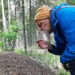Nyt etsitään Pirkanmaan suurinta muurahaiskekoa – luonnonläheinen kisa kannustaa liikkumaan ja tekemään samalla havaintoja