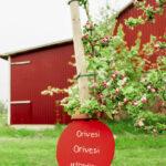 Oriveden oma omenapuu Ahvenanmaalla tuotti kymmenen kilon sadon – mehumaistiaisia tulossa joulun alla