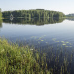 Orivedeltä ja Juupajoelta ei edelleenkään sinilevähavaintoja – etenkin Etelä-Suomessa sinilevä on lisääntynyt