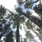 """""""Lähinnä pelkään, että täällä ei tehdä riittävästi"""" – Luonnonsuojeluhdistyksessä EU:n metsästrategia koetaan vaatimattomaksi"""