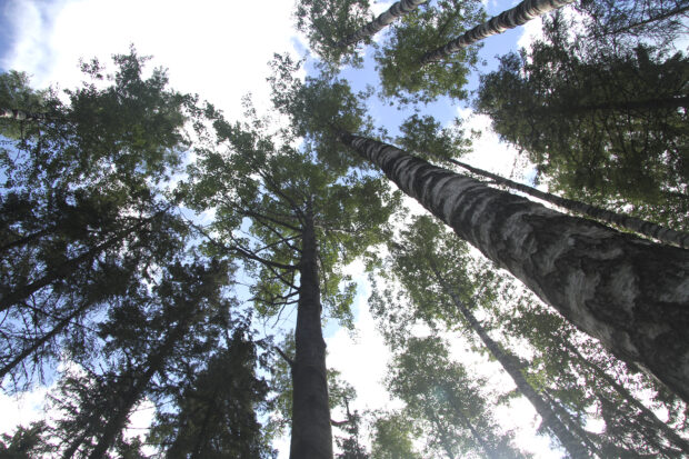 Orivesiläistä metsämaisemaa. Kuva: Markus Puolakanaho