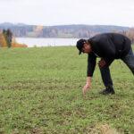 Juupajokelainen maanviljelijä kylvi ensimmäisten joukossa tällä alueella syysohraa – nyt hän toivoo viljan kannalta suotuisaa talvea